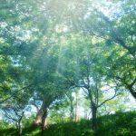 井伊直虎公が大河ドラマにて龍雲丸に依頼した木材の伐採、儲かる?