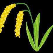 稲・稲穂のイラスト