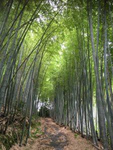 竹のトンネル