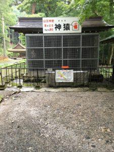 日吉神社神猿